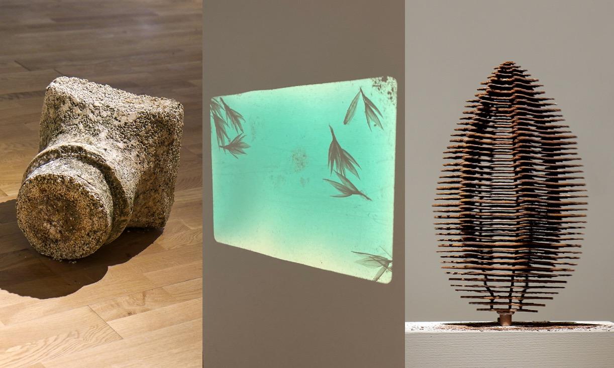 تجلّي الطبيعة في أعمال فنية حول ثلاث بذور